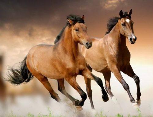 Los caballos no entienden de placebo.