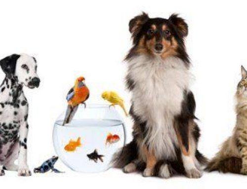 Botiquín veterinario homeopático.